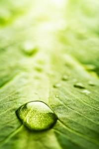 water-drop-on-leaf