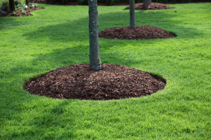Mulch around trees in turf